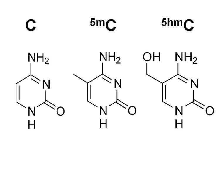 5-Hydroxymethylcytosine 5Methylcytosine amp 5Hydroxymethylcytosine DNA Standard Set