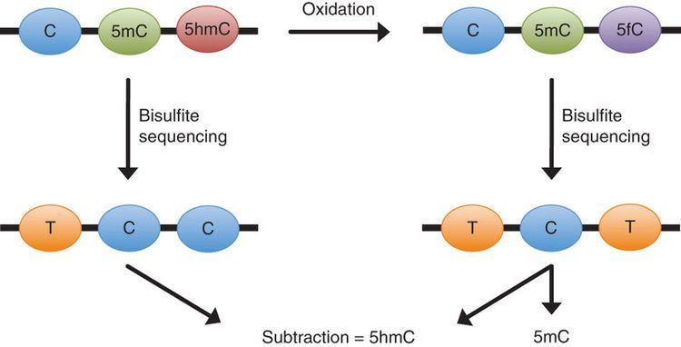 5-Hydroxymethylcytosine Oxidative bisulfite sequencing of 5methylcytosine and 5