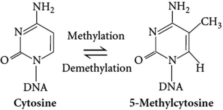 5-Methylcytosine Methylation of cytosine to 5methylcytosine Figure 4 of 8