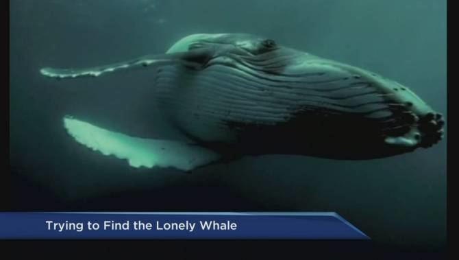 52-hertz whale Help find 52Hertz dubbed the loneliest whale in the world