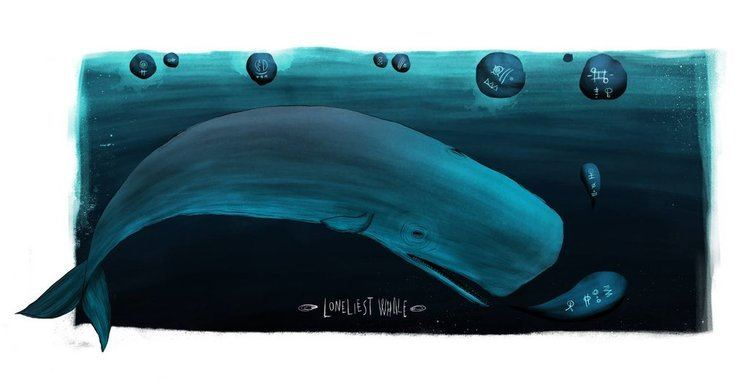 52-hertz whale The Lonely Whale39s Cry for Love by techgnotic on DeviantArt