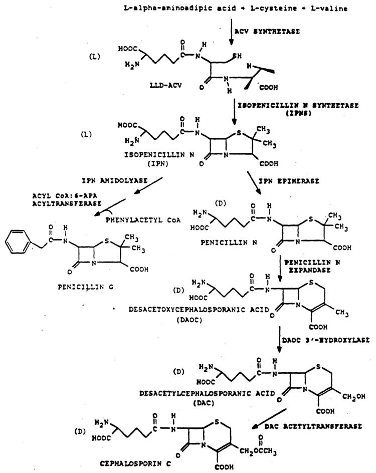 6-APA Patent EP0540210B1 Novel bioprocesses for preparing 7ACA and 7