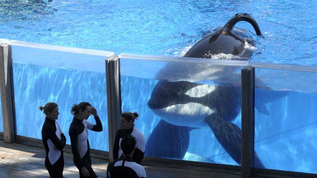 63 Seaworld The Daily Show39s Wyatt Cenac PETA Thinks The Treatment of