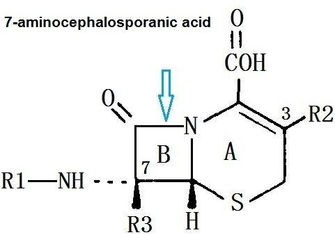 7-ACA 7Aminocephalosporanic acid 957686