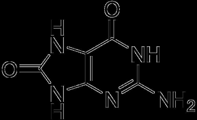 8-Oxoguanine httpsuploadwikimediaorgwikipediacommons33