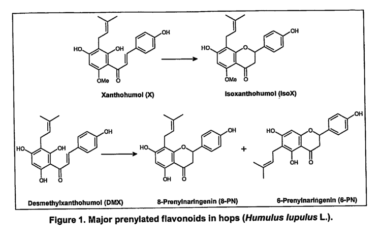 8-Prenylnaringenin Patent US20070110835 Method for the production of enriched hop