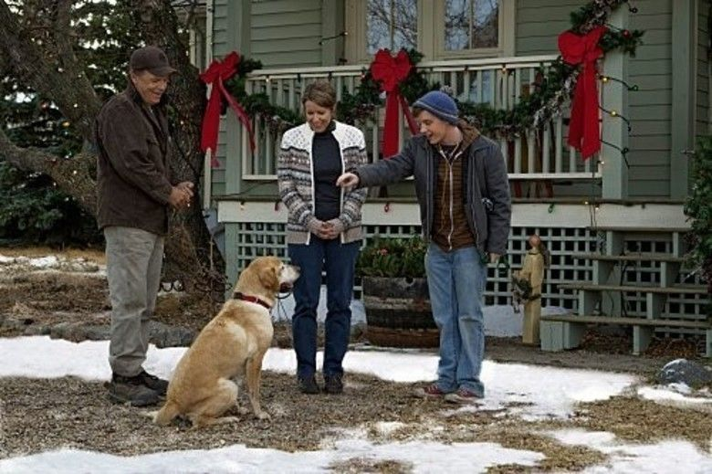 A Dog Named Christmas movie scenes
