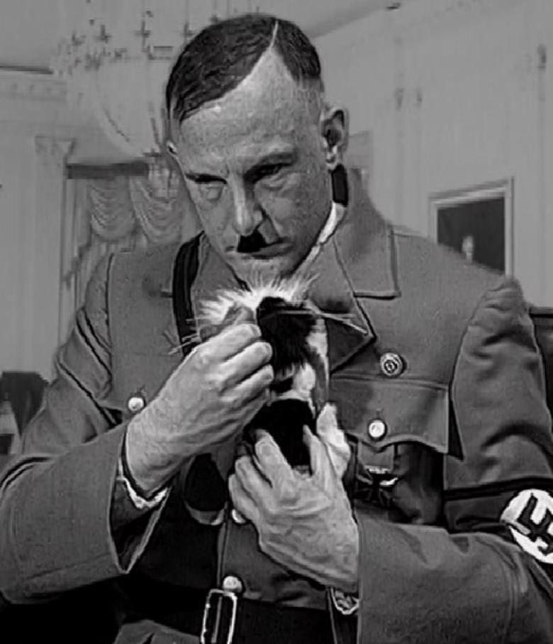 A Kitten for Hitler movie poster