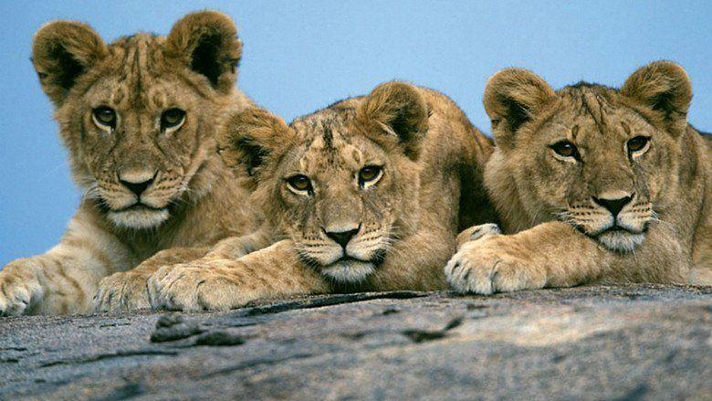 African Cats movie scenes