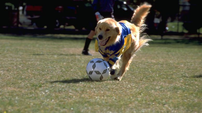 Air Bud: World Pup movie scenes