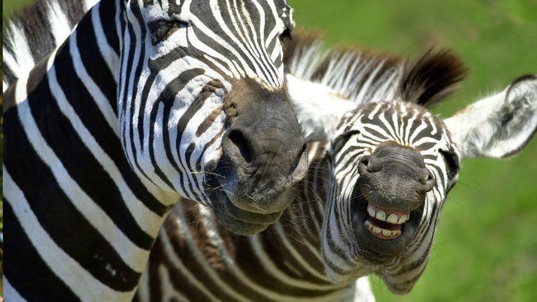 Animals Are Beautiful People movie scenes