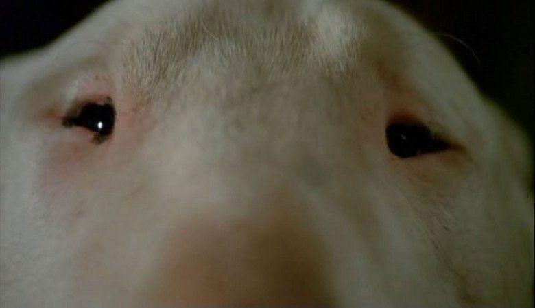 Baxter (film) movie scenes