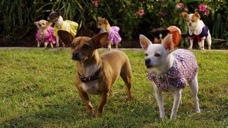 Beverly Hills Chihuahua 2 movie scenes