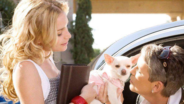 Beverly Hills Chihuahua movie scenes