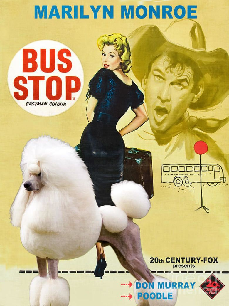 Bus Stop Movie 1956