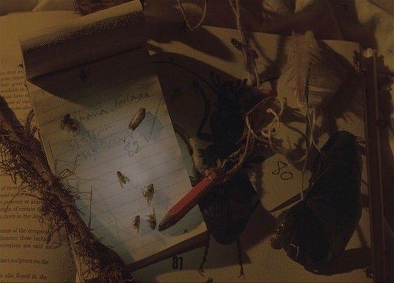Drowning by Numbers movie scenes