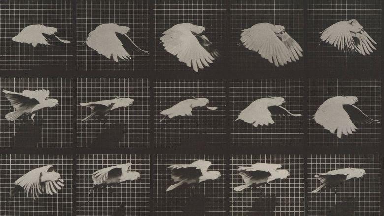 Eadweard Muybridge, Zoopraxographer movie scenes