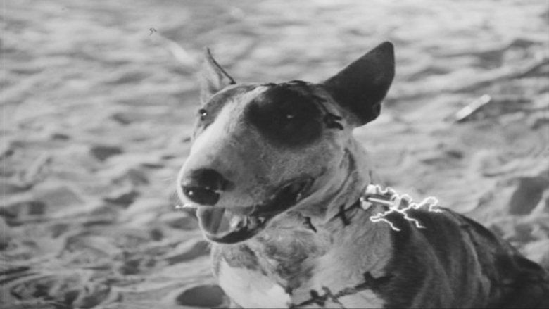 Frankenweenie (1984 film) movie scenes