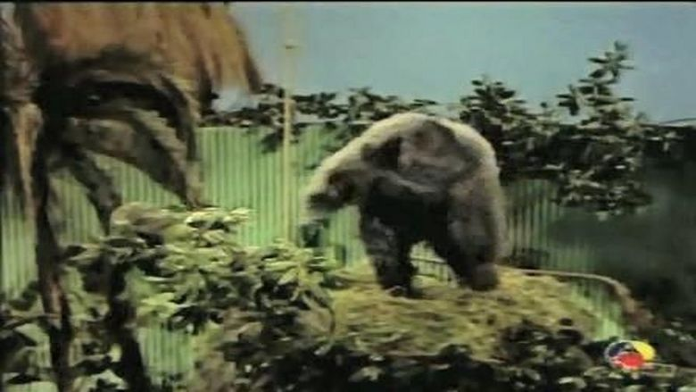 Gorilla at Large movie scenes