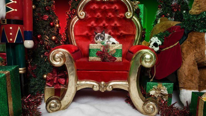 Grumpy Cats Worst Christmas Ever movie scenes