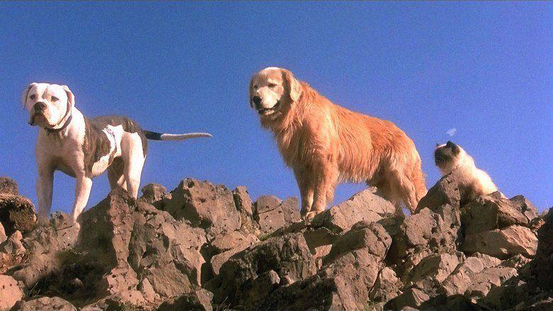 Homeward Bound: The Incredible Journey movie scenes