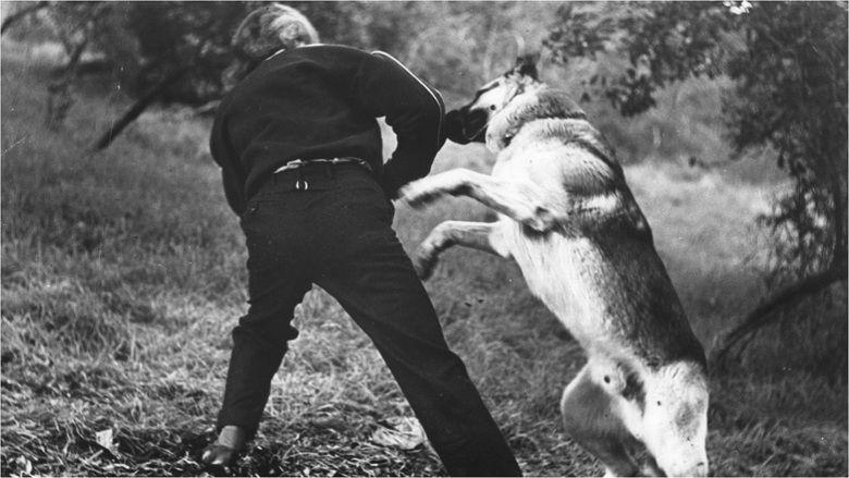 I Was a Teenage Werewolf movie scenes