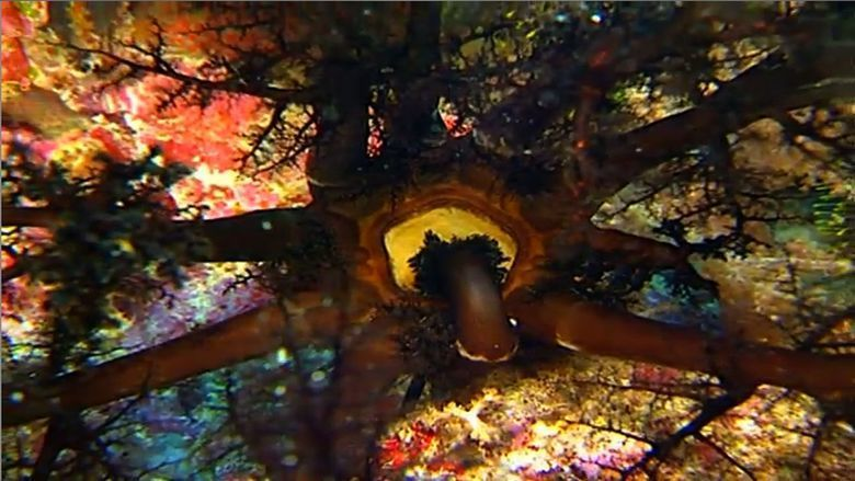 Impressionen unter Wasser movie scenes