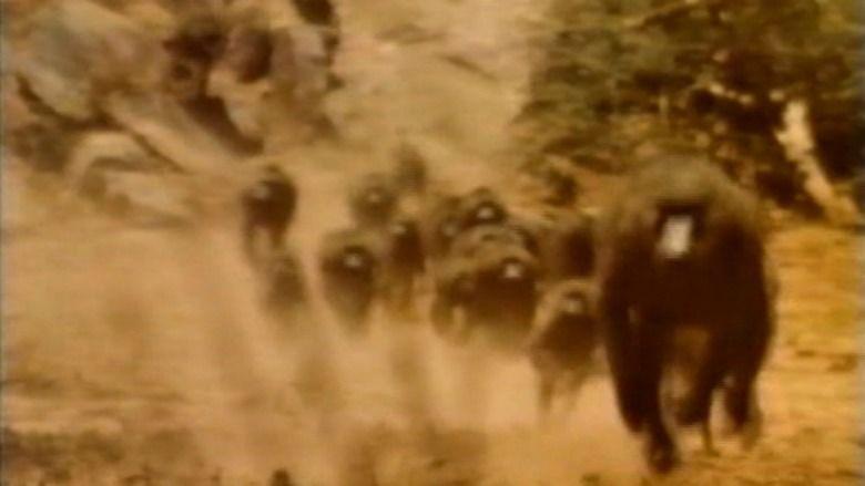 In the Shadow of Kilimanjaro movie scenes
