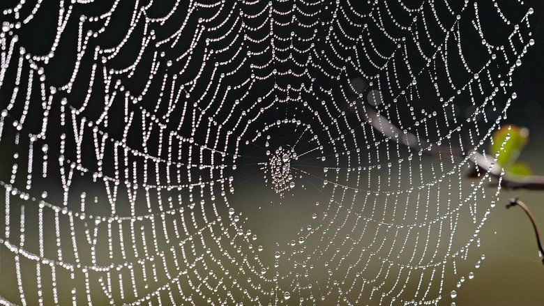 In the Spiders Web movie scenes