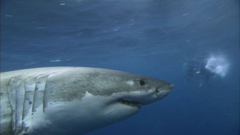 Jaws in Japan movie scenes