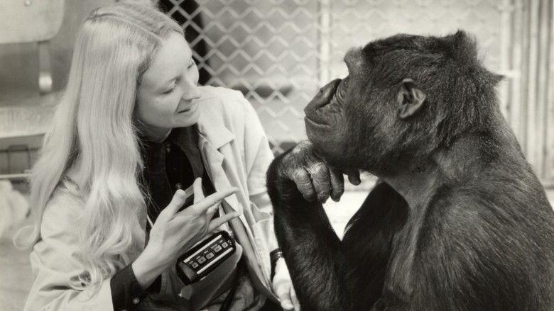 Koko: A Talking Gorilla movie scenes