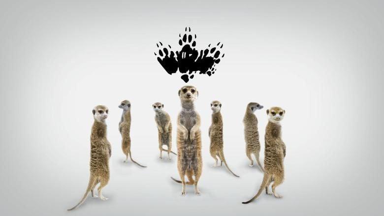 Meerkat Manor: The Story Begins movie scenes