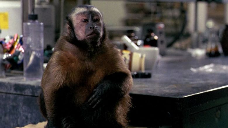 Monkey Shines movie scenes