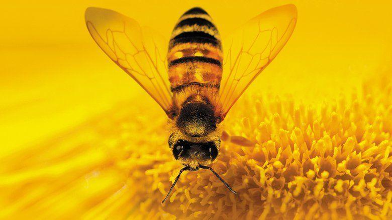 More than Honey movie scenes