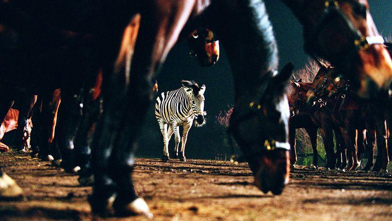 Racing Stripes movie scenes