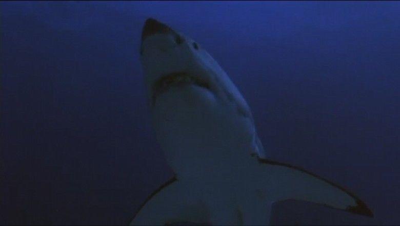 Raging Sharks movie scenes