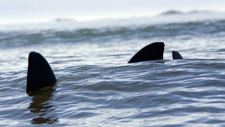Shark Swarm movie scenes