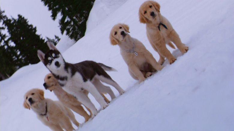 Snow Buddies movie scenes