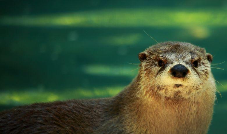 Tarka the Otter (film) movie scenes