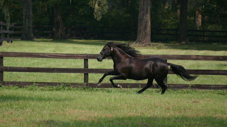 The Black Stallion (film) movie scenes