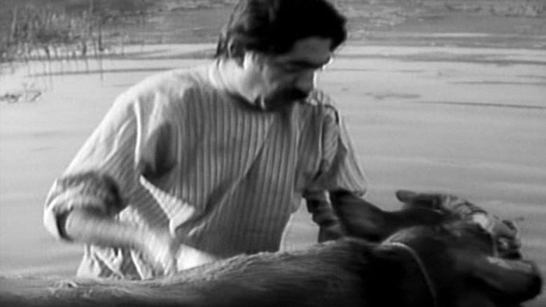The Cow (film) movie scenes