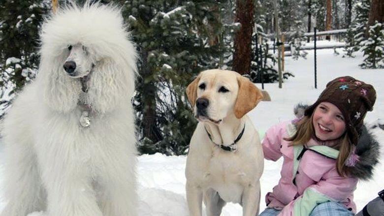 The dog who saved christmas vacation trailer 2010 mario lopez paris hilton dean cain
