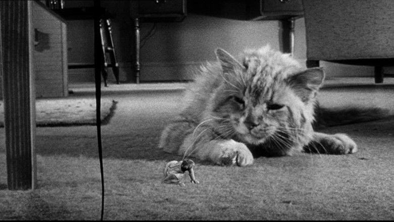 The Incredible Shrinking Man movie scenes