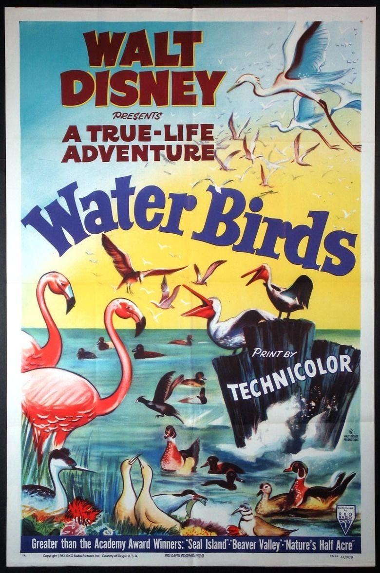 Water Birds movie poster