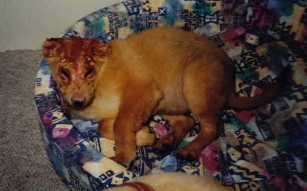 A Dog Named Gucci Filmmaker Gorman Bechard Why I Created quotA Dog Named Gucciquot