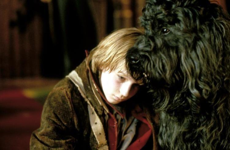 A Dog of Flanders (1999 film) A Dog of Flanders 1999 film Alchetron the free social encyclopedia