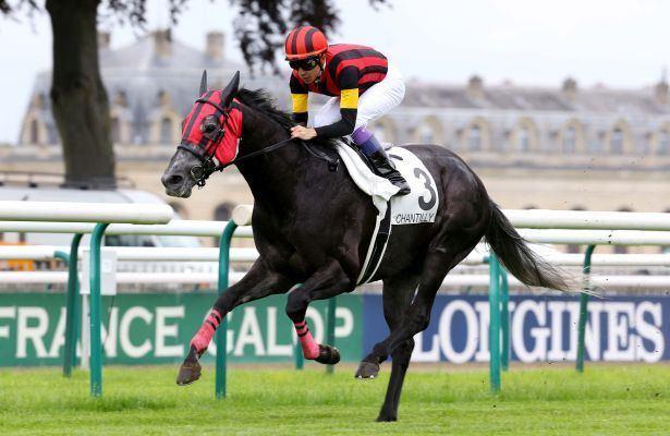 A Shin Hikari A Shin Hikari Horse