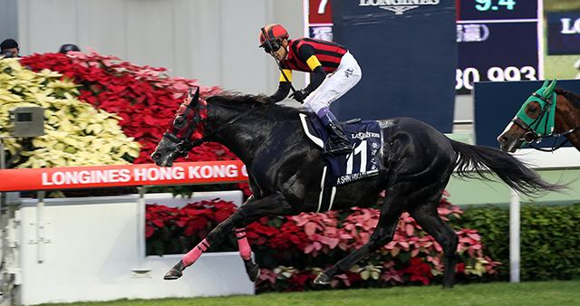 A Shin Hikari Horse Races amp Events Reaction To A Shin Hikari Ascot