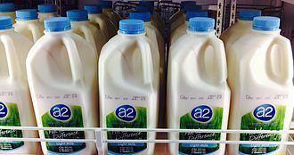 A2 milk A2 milk Wikipedia