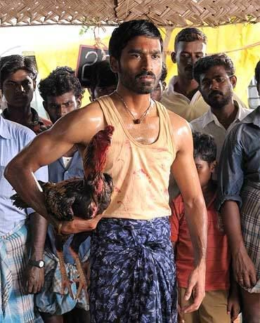 Aadukalam Dhanush has become an adult with Aadukalam Rediffcom Movies